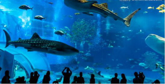 【诺斯顿】水族馆中的异形结构工程量计算