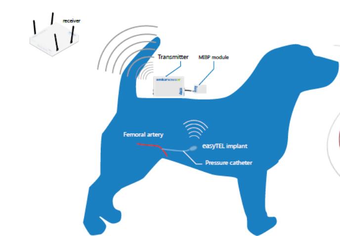 EMKA大动物遥测系统