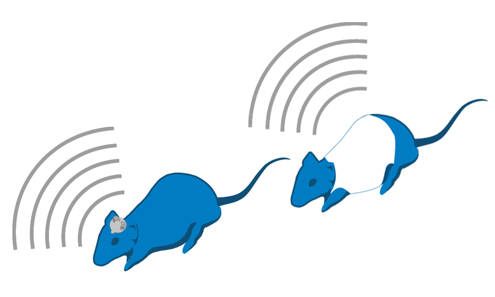 EMKA大小鼠心电脑电遥测