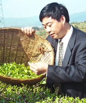 颜泽文:敢挑川茶崛起的大梁
