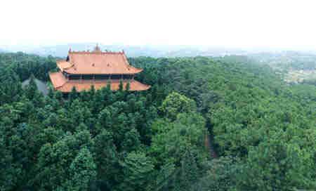 重庆市荣昌县探索造林的新模式