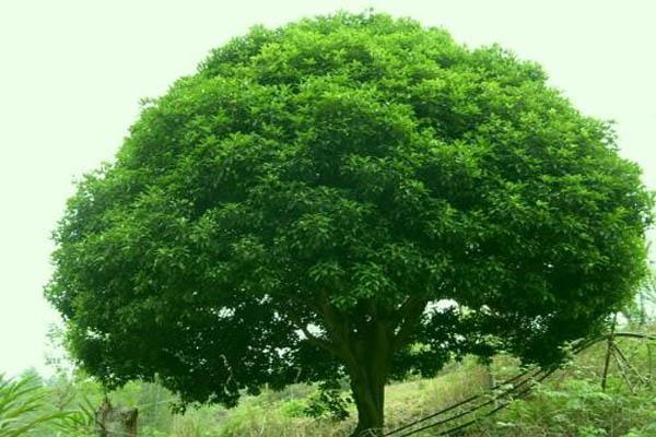 威遠宏揚苗木合作社助農民增收致富