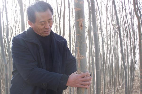 柳樹下的林業夢致富的帶頭人