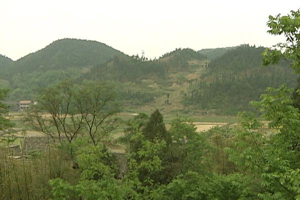 綠滿山川——記蓬勃發展的匯森林業