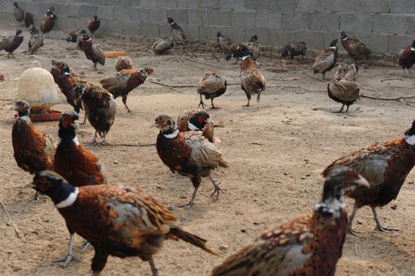 走进陕西多维生态农林科技有限公司