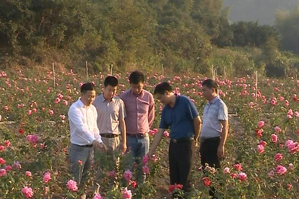 春舞枝集团