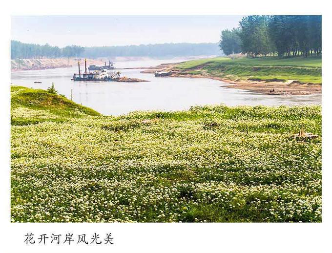 淮滨白营因水致贫,以水而兴,村貌天天在变