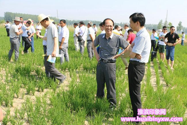 河南省農技推廣總站在淮濱縣召開全省水稻直播現場觀摩培訓會