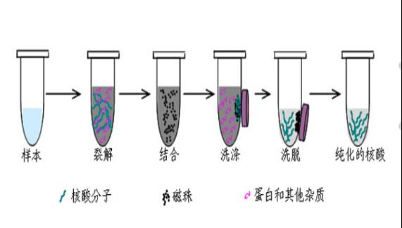 核酸提取专用磁珠