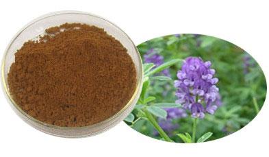 紫花苜蓿提取物
