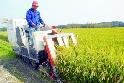 水稻種植技術