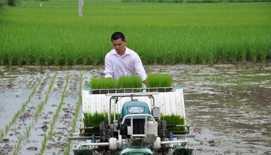 水稻种植技术