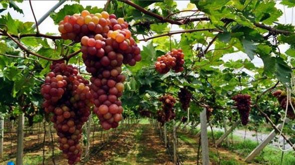 农业滴灌系统