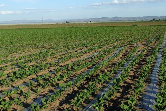 農業滴灌系統