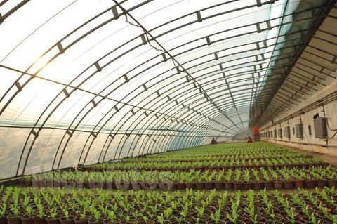 农用温室大棚