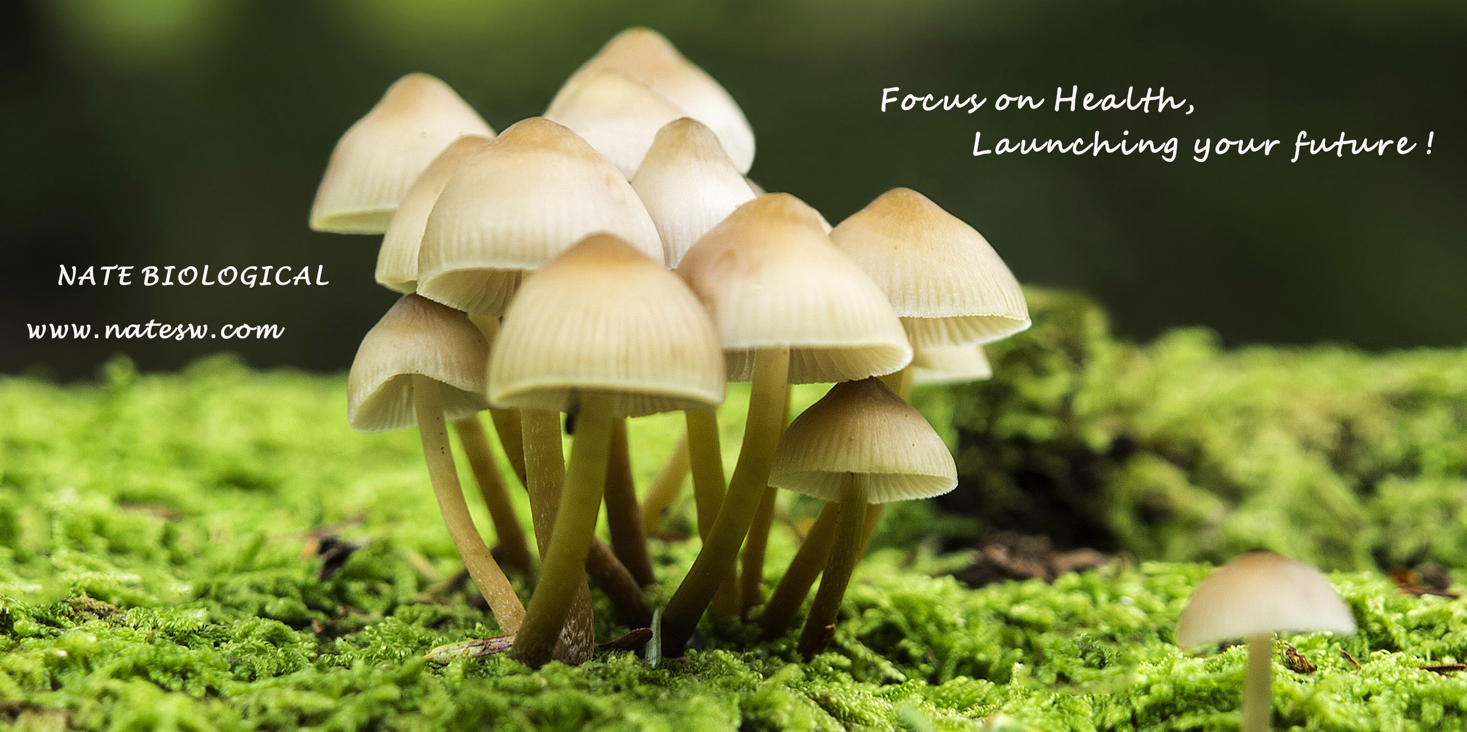 Fungal polysaccharides can be targeted to what diseases