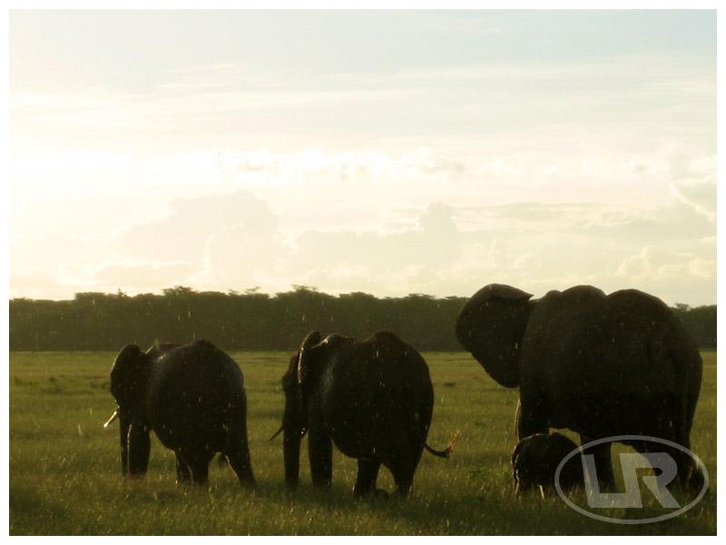 肯尼亞safari 注意事項