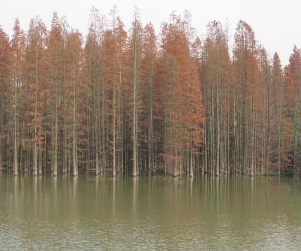 青山湖一日游