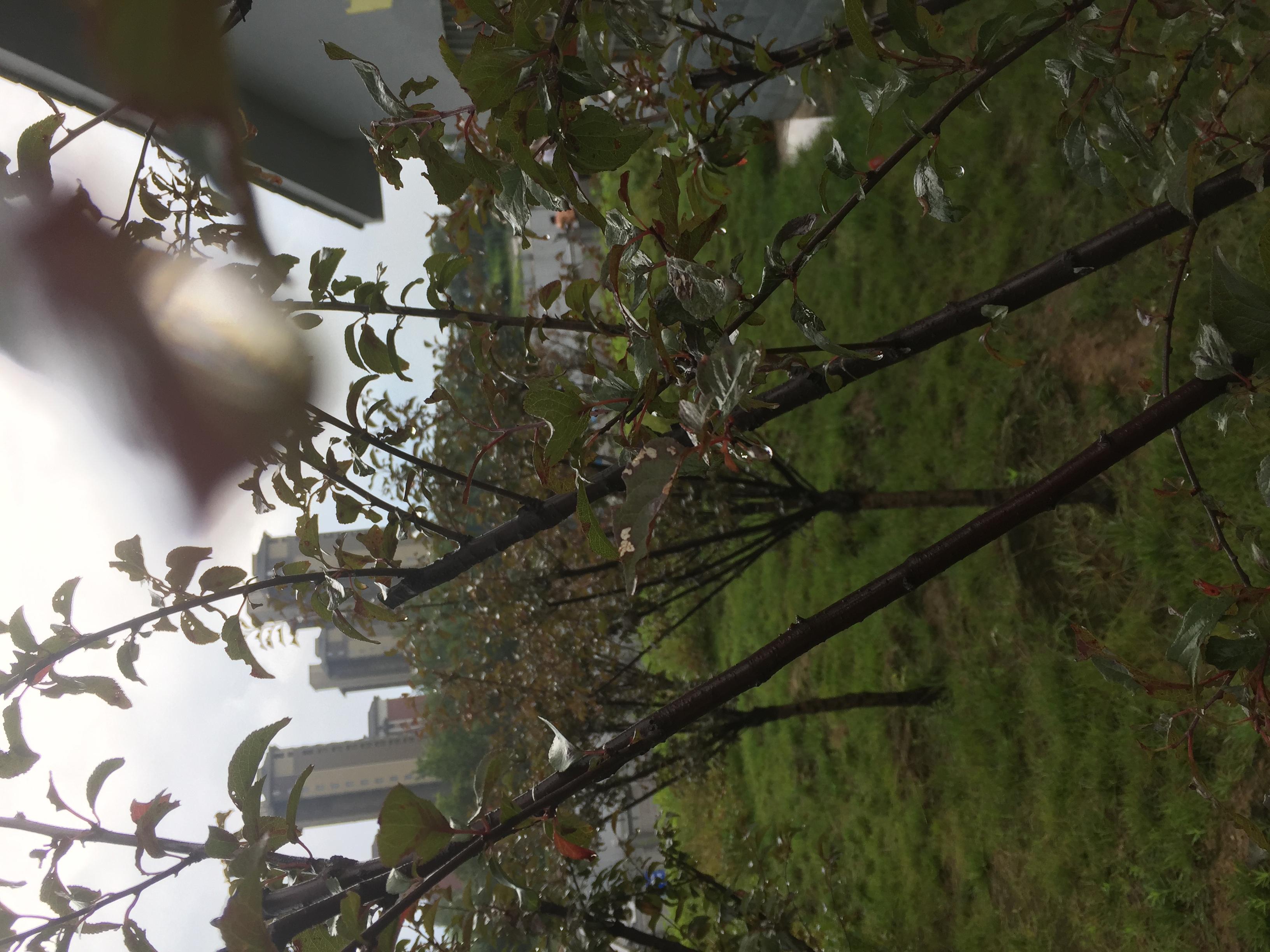 新郑港区梅河治理环保项目
