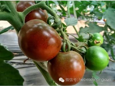 赵县福地农产品
