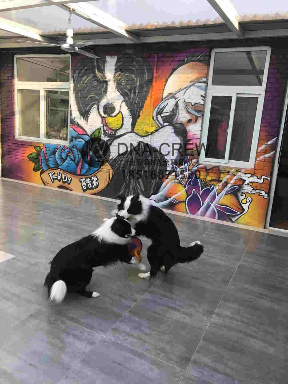 北京dna涂鸦团队二次边牧涂鸦墙创作,融入了纹身元素,洗衣元素等等