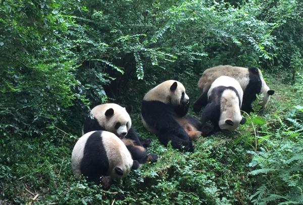 熊猫1-4