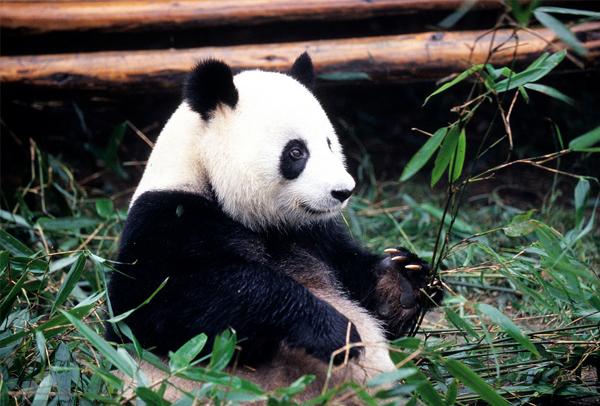 熊猫1-5