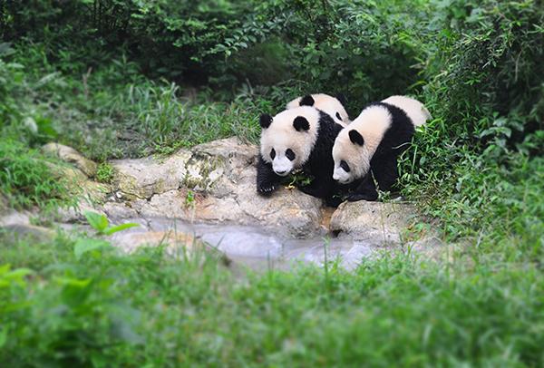 熊猫1-7