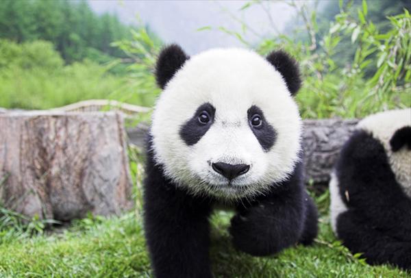 熊猫1-9