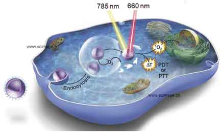 Photoconversion-Tunable Fluorophore Vesicles for Wavelength-Dependent Photoinduced Cancer Therapy