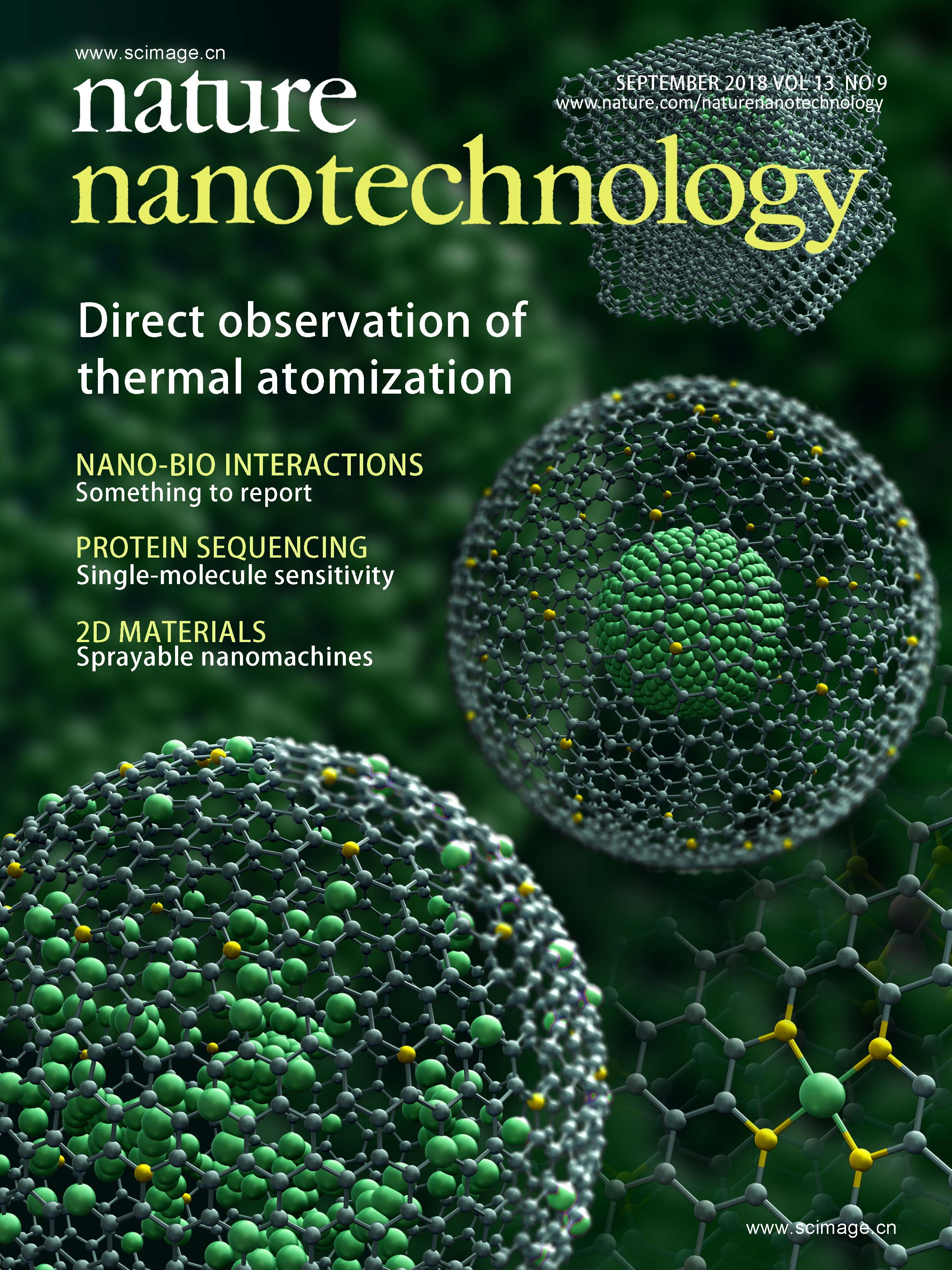 Direct observation of noble metal nanoparticles transforming to thermally   stable single atoms
