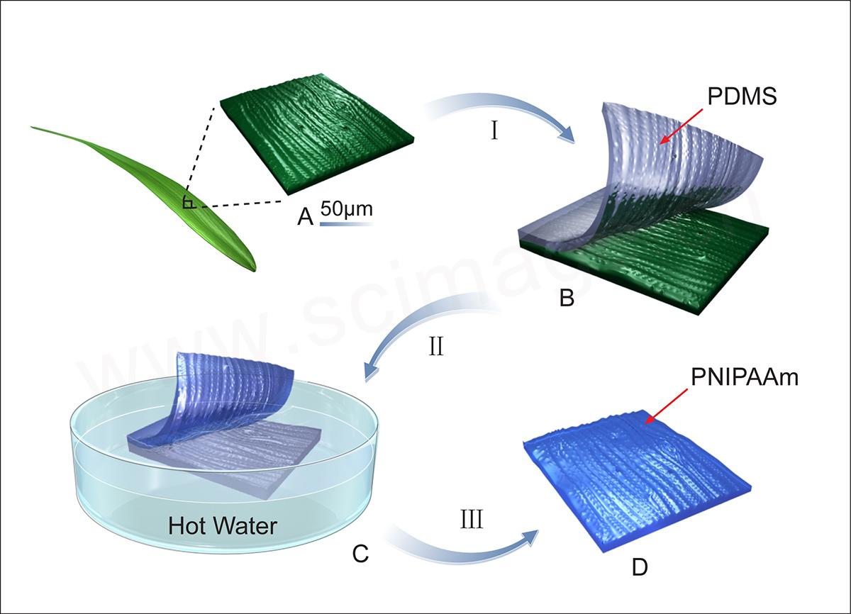 PNIPAAm高分子聚合物材料