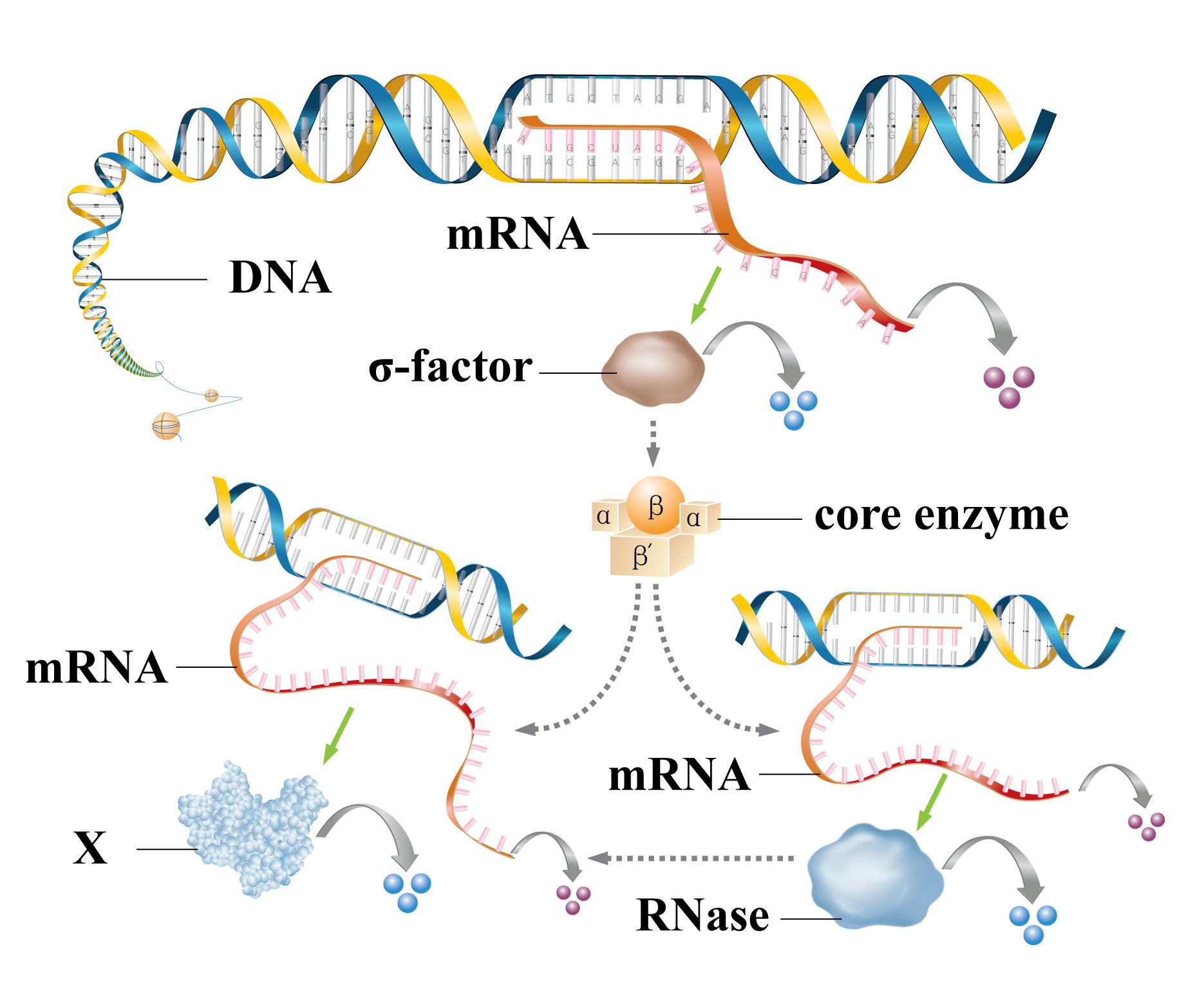 基因剪辑图