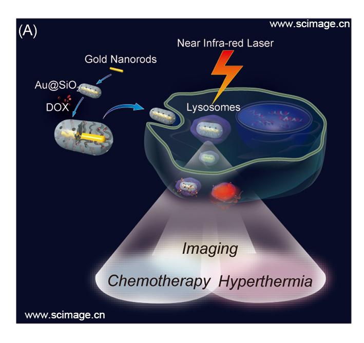 介孔二氧化硅包覆的金纳米棒作为癌症处理的多功能诊疗平台