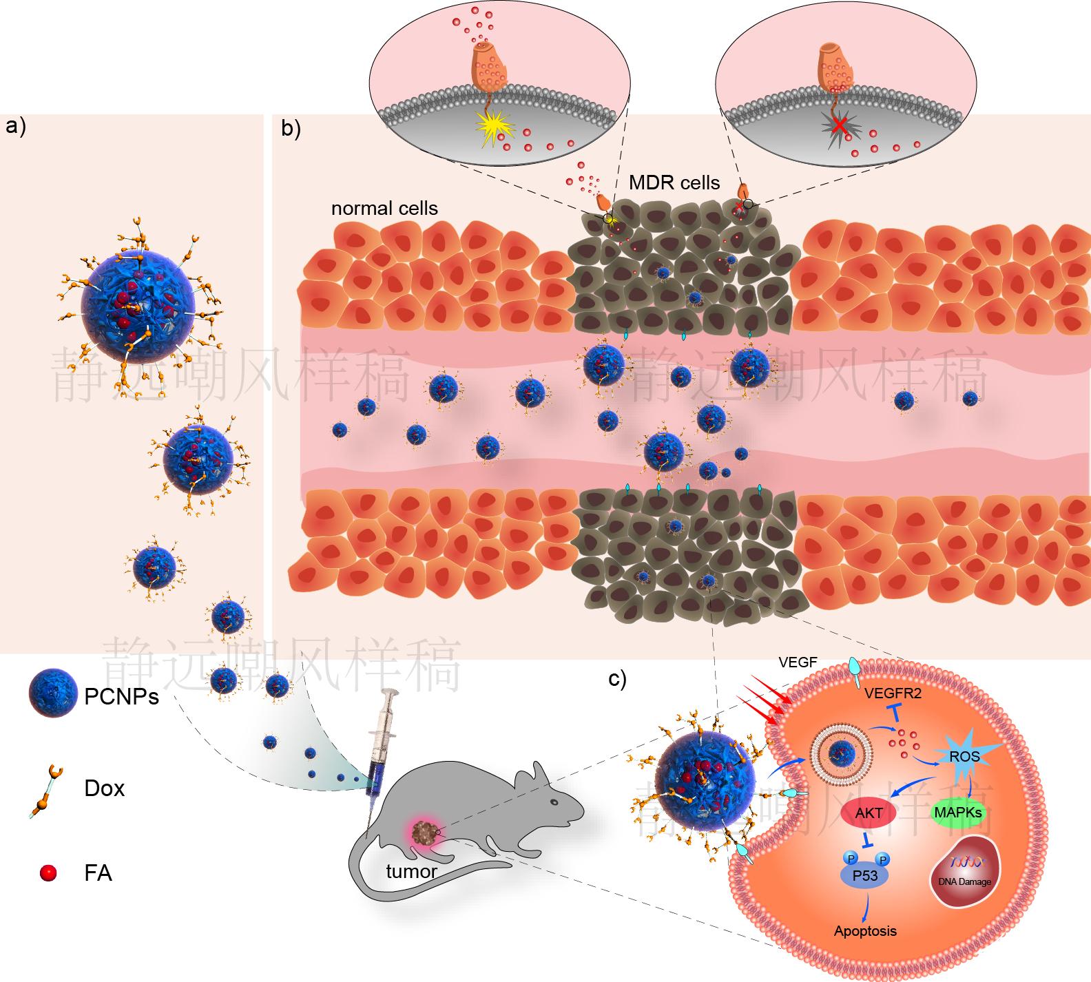 纳米药物在癌细胞中的作用机理