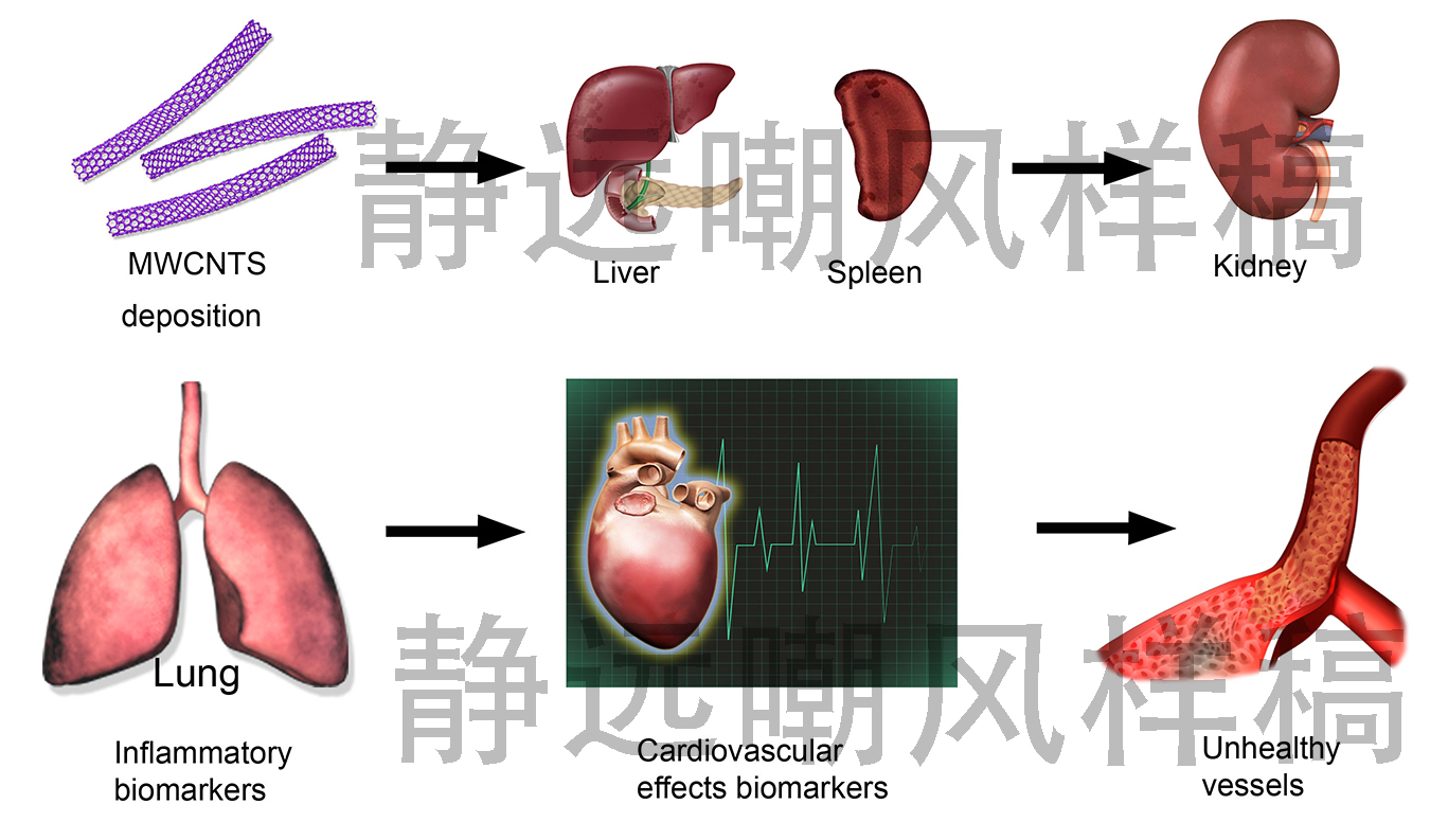 碳纳米管对身体各部位毒性