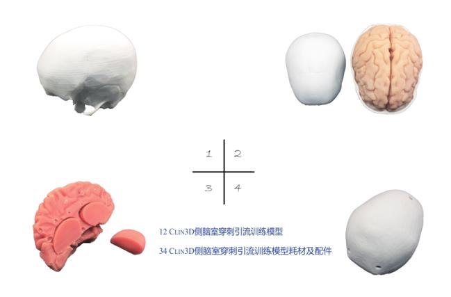 侧脑穿刺引流模型 SJ02A002