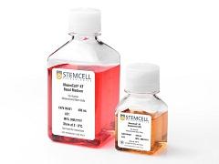 Stemcell 05420  间充质干细胞