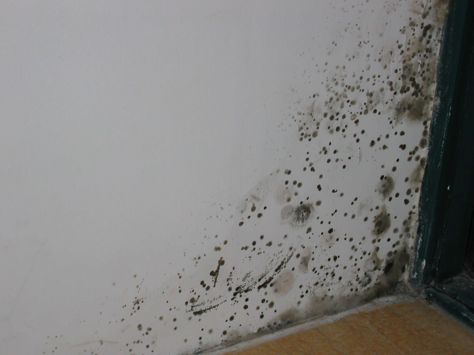 轩彩娱乐手机客户端下载建材温馨提示-墙体发霉影响美观