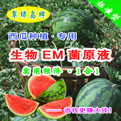 用翠绿岛牌生物EM菌原液种西瓜★实现连耕连播连种了,能赚大钱了!