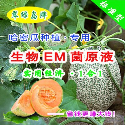 翠绿岛牌哈密瓜种植-生物EM菌原液★能提高产量和品质!
