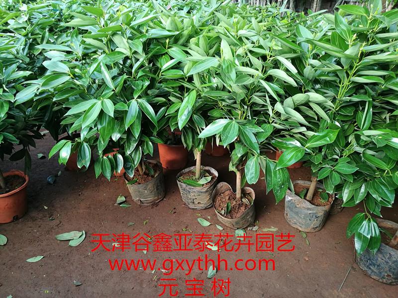 天津办公室绿植如何选择,租赁还是购买?