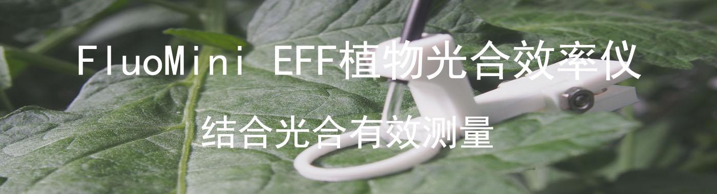 FluoMini EFF植物光合效率一起