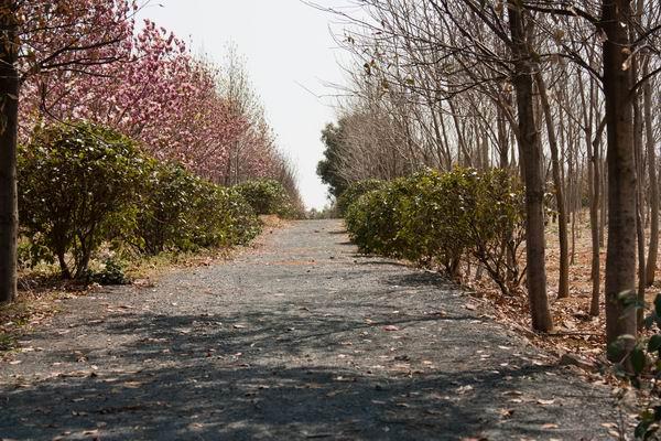 百杨生态园