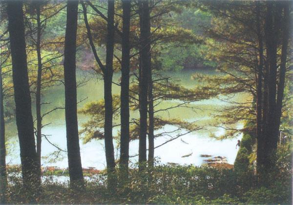 扬子鳄自然保护区