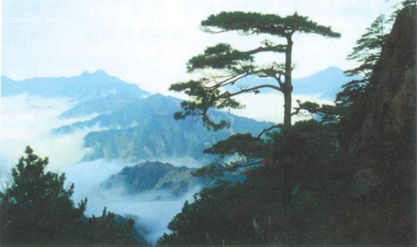 清凉峰自然保护区