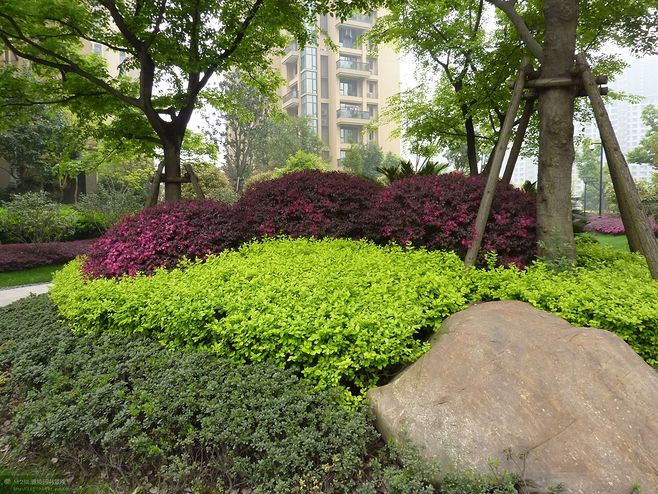 绿化树种选择原则_别墅楼梯设计需要遵循哪些原则_绿化设计原则