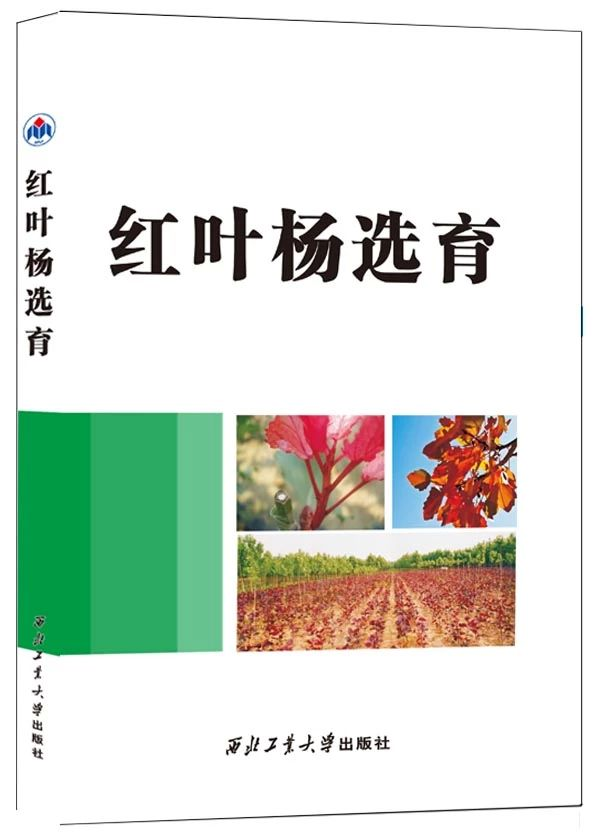 红叶杨选育