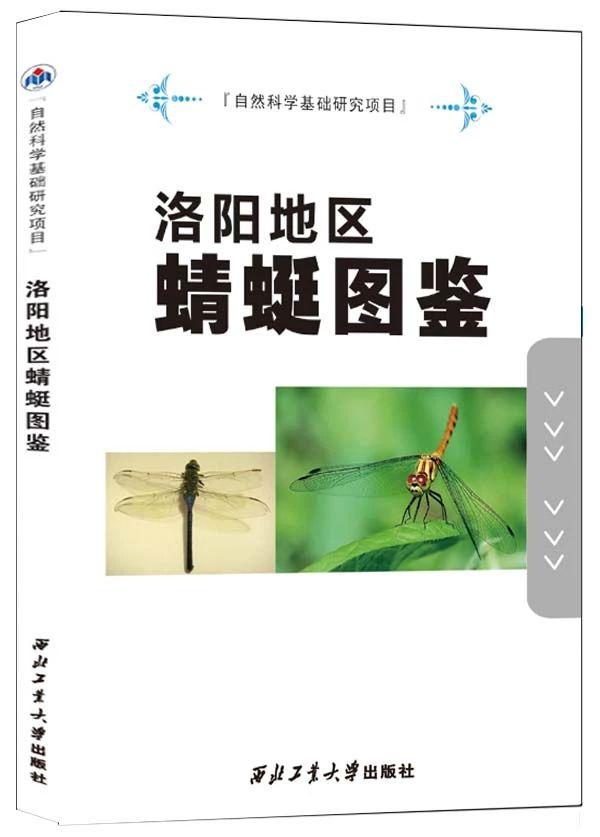 洛阳地区蜻蜓图鉴