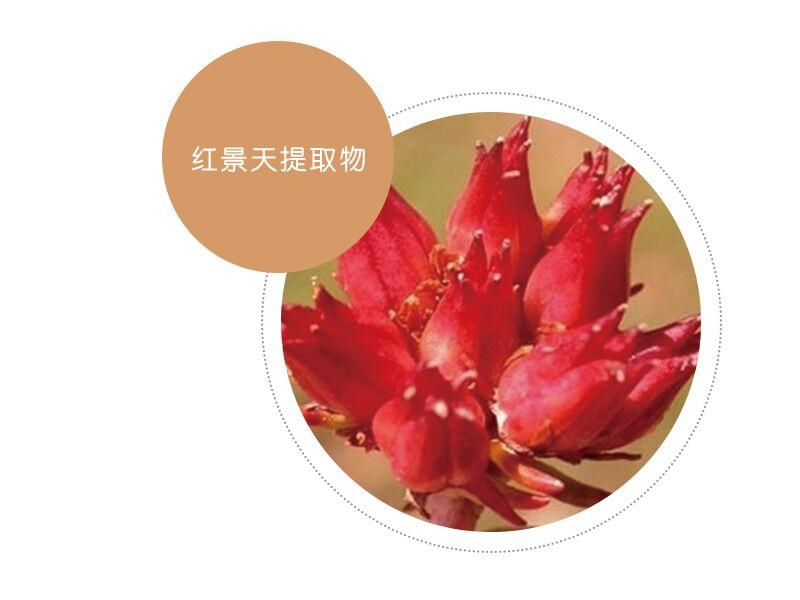 大花红景天根提取物